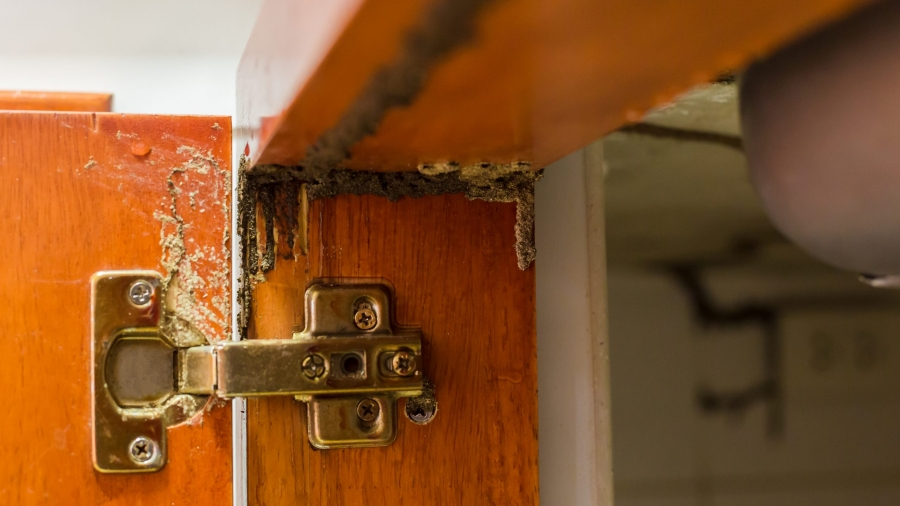 Traces of termites eat wood, Timber beam of door damaged by termite which eat for a long time, The wood home with termites damage in kitchen.