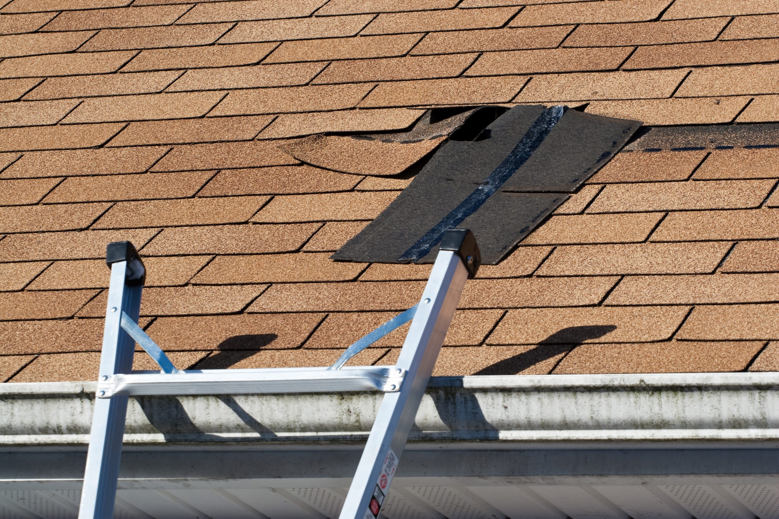 Damaged Roof Shingles on a business roof